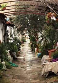 Οι «Παράγκες» της Πάτρας - Η γειτονιά που είναι γεμάτη από λουλούδια (φωτό)