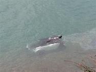 Πατρών - Κορίνθου: Έπεσε στη θάλασσα με το smart από ύψος τεσσάρων μέτρων!