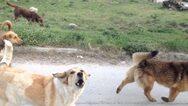 Πάτρα: Επίθεση από αδέσποτα σκυλιά δέχτηκε γυναίκα στην Οβρυά
