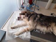 Κατάκολο Ηλείας: Πυροβόλησαν και τραυμάτισαν σκύλο