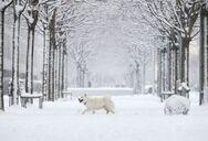 Ελβετία: Είχαν θαφτεί κάτω από χιονοστιβάδα και σώθηκαν χάρη στους σκύλους τους