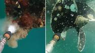 Καθαρίζοντας μια προπέλα σκάφους με πλυστικό μηχάνημα μέσα στο νερό (video)