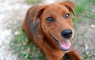Κρήτη: Κρέμασαν σκύλο από γέφυρα (σκληρές εικόνες)
