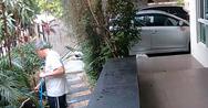 Πεινασμένο φίδι βάζει στόχο μια κατοικίδια γάτα (video)