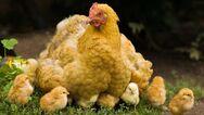 Ρωσία: Καταγράφηκε το πρώτο περιστατικό ανθρώπινης μόλυνσης με την γρίπη των πτηνών AH5N8