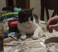 Έξυπνη γάτα κάνει απίθανο τρικ με κέρμα (video)