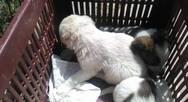 Πάτρα: Όλο το πλάνο για το δημοτικό κτηνιατρείο στο Δρέπανο