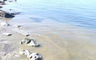 Έντονη η κιτρινίλα στη θάλασσα στο Νότιο Πάρκο της Πάτρας