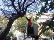 Πάτρα: Kλάδεμα δέντρων στην πλατεία Ομονοίας και στα Σύνορα