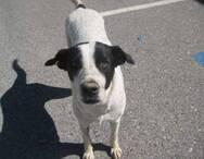 Αγρίνιο: Παρέμβαση του αρχηγού της ΕΛ.ΑΣ. για τον φόνο της αδέσποτης σκυλίτσας