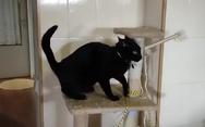 Γάτα τρελαίνεται για… άγριο μασάζ (video)
