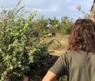 Άνδρας σταματάει ρινόκερο που ορμάει καταπάνω του (video)
