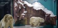 Κίνα: Διαμονή παρέα με πολικές αρκούδες προσφέρει ξενοδοχείο