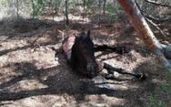 Κτηνωδία στη Λέσβο: Έδεσε άλογο σε δέντρο και το άφησε να πεθάνει