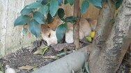 Αγρίνιο: Συγκίνηση για τη σκυλίτσα που δεν αφήνει τα κουτάβια της που δηλητηριάστηκαν από φόλες