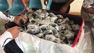 Γκαλαπάγκος: Αστυνομικός επιχείρησε να διακινήσει λαθραία σχεδόν 200 χελώνες