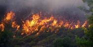 Δυτική Ελλάδα: Ξέσπασε πυρκαγιά στην περιοχή του Πούντου (video)