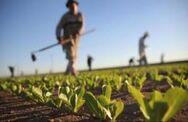 Λιβανός: Απαλλαγή από το τέλος επιτηδεύματος για τους αγρότες και για το 2020