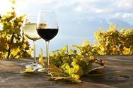 Τα κρασιά της Αχαΐας και της Ηλείας ξεκινούν το ταξίδι τους στην Ασία