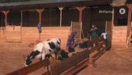 Ατύχημα στη Φάρμα για τη Μαρία Μιχαλοπούλου (video)