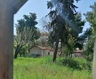 Πάτρα: Ο κήπος του Σκαγιοπουλείου έχει μετατραπεί σε… λιβάδι!