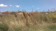 Πάτρα: Έκκληση από τον δήμο για καθαρισμό των οικοπέδων από χόρτα