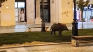 Θεσσαλονίκη: Πώς βρέθηκε το αγριογούρουνο στην Πλατεία Αριστοτέλους