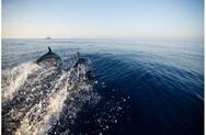 Νεκρά εντοπίστηκαν δύο δελφίνια σε παραλίες της βόρειας Ελλάδας