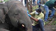 Ινδία: Νεκροί εντοπίστηκαν 18 άγριοι ασιατικοί ελέφαντες - Πιθανόν χτυπήθηκαν από κεραυνούς (pics+video)