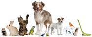 Η ΚοινοΤοπία στηρίζει τη νομοθετική πρωτοβουλία για την ευζωία των ζώων συντροφιάς - Πρόγραμμα «ΆΡΓΟΣ»