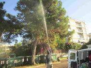 Πάτρα: Ψεκασμός δέντρων στην οδό Μαιζώνος
