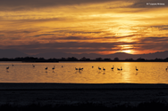 «Click στη φύση» - Το ηλιοβασίλεμα του Μεσολογγίου και τα φοινικόπτερα σε διαγωνισμό της WWF Ελλάς