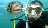 Pufferfish ποζάρει για μια selfie με δύτρια (video)