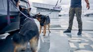 Εκπαιδευμένα σκυλιά μπορούν να εντοπίσουν ανθρώπους που έχουν μολυνθεί από κορωνοϊό στη Βρετανία