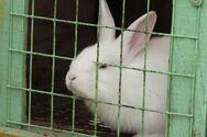 Προς κατάργηση η εκτροφή ζώων σε κλουβιά