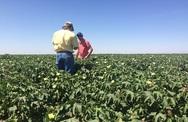 Ψηφιακά η εγγραφή στο Μητρώο Αγροτών και η μετάκληση εργατών γης