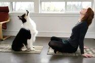 Ο viral σκύλος που κάνει… ασκήσεις γιόγκα (video)