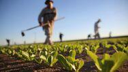 Αγρότες: Ενίσχυση 260 εκατ. ευρώ μέσω ΕΣΠΑ