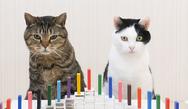 Γάτες και ντόμινο: Το βίντεο με τις 47 εκατομμύρια προβολές