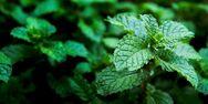 Μυρωδικά βότανα - Θησαυρός για την υγεία