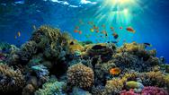 ΟΗΕ: Σε κίνδυνο ο μεγάλος κοραλλιογενής Ύφαλος της Αυστραλίας