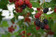 Έμφραγμα - Τα αντιοξειδωτικά καλοκαιρινά φρούτα που μειώνουν τον κίνδυνο