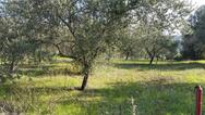 Κρήτη: Νεκρός εντοπίστηκε από τη μητέρα του 18χρονος σε χωράφι