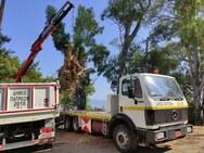 Πάτρα: Aπομάκρυνση κομμένων δέντρων και καθαρισμός στο Δασύλλιο (φωτο)