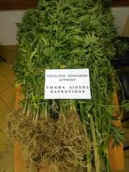 Δυτική Ελλάδα: Συνελήφθη επ΄αυτοφώρω καλλιεργητής ναρκωτικών σε περιοχή του Αγρινίου (φωτο)