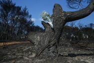 Μάτι - Τα ονόματα των 102 νεκρών στη φονική πυρκαγιά