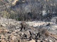 'Μαύρη' γη άφησε πίσω της η φωτιά στην Δροσιά - Να κηρυχθεί η περιοχή σε κατάσταση έκτακτης ανάγκης ζητά ο Δήμαρχος