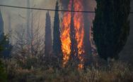 Αχαΐα: Νέα φωτιά στη Ροδοδάφνη - Ελικόπτερο επιχειρεί στην κατάσβεση