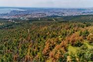 Θεσσαλονίκη: Σε ισχύ μέχρι αύριο η απαγόρευση κυκλοφορίας στο Σέιχ Σου λόγω πολύ υψηλού κινδύνου πυρκαγιάς