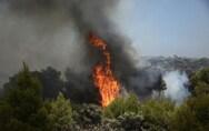 Ηλεία: Πυρκαγιά σε δασική έκταση στην περιοχή Καυκανιές